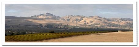 Barossa-Landscape