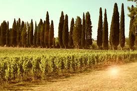 Tuscan sun wines2