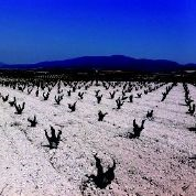 wines of garnacha vineyard2