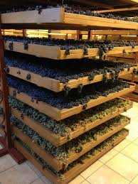Amarone drying racks