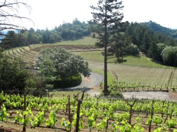 Smith Madrone vineyards