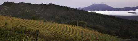 Smith Madrone vineyards2