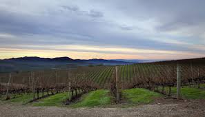 Caymus winery