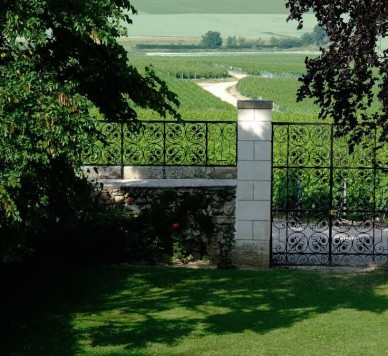 Veuve Clicquot vineyards2