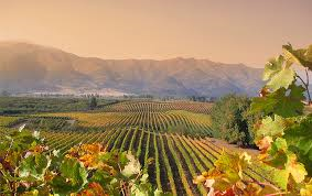The beautiful Colchagua Valley; courtesy of Wines of Chile