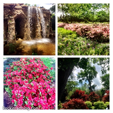 Williams Selyem Arboretum3