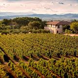 Domaines Paul Mas vineyards