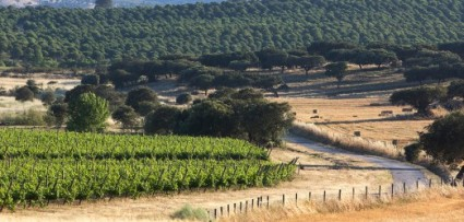 Monte Velho Esporao Altentejo vineyards