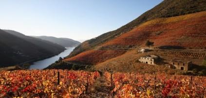 Monte Velho Esporao vineyard