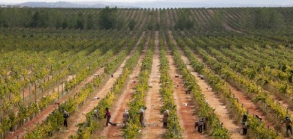 Monte Velho Esporao vineyard2
