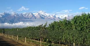 Rutini vineyards2