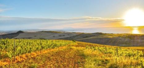 Winestudio May Gali vineyards