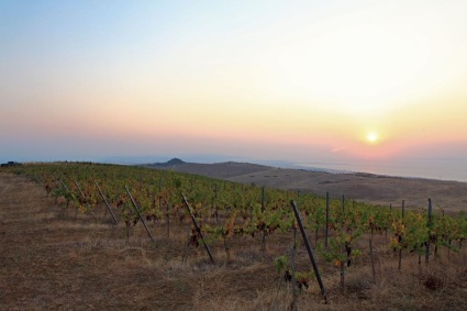 Winestudio May Gali winery