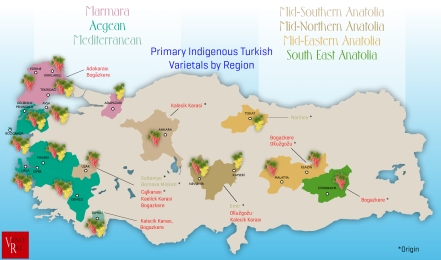Winestudio May Turkey-Terroir-+-Wine-Grapes
