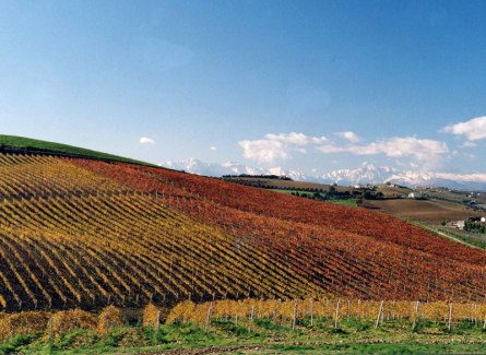 Abruzzo - Barba Vineyards