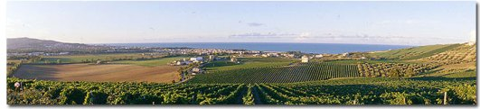 Abruzzo - Barba vineyards2