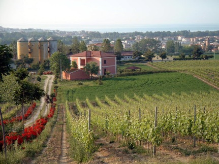 Abruzzo - Barba winery