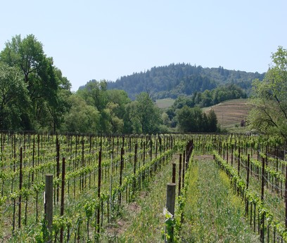 Dry Creek Valley Martorana vineyard