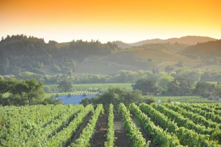 Dry Creek Valley via drycreekvalleydotorg