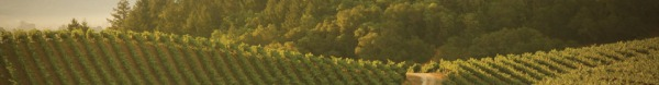 Dry creek valley vineyards2