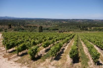 Quinta da Pellada via wineanorak.com