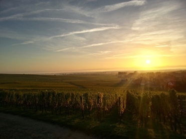 Trimbach vineyard Alsace