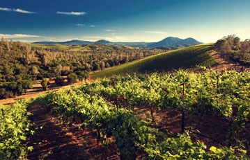Brassfield Volcanic Ridge Vineyard