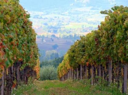 Umbria Paolo Bea winery via tripadvisor