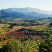 Wines of Garnacha vineyard