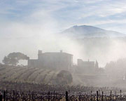 Rhone Valley Domain de Mourchon vineyards