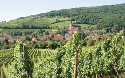 Rhone Valley vineyards via prezi