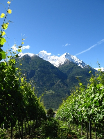 valle d'aosta grosjean vineyards2