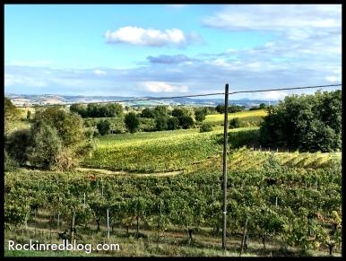 Boscarelli vineyards