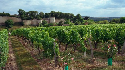 www.winespectator.com