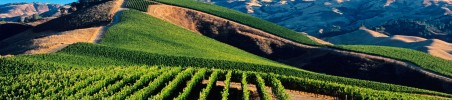 Dracaena Wines vineyards