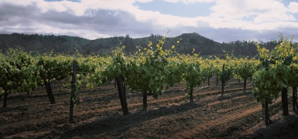 """A very cool climate punctuated by afternoon sea breezes sweep through the vineyards during peak growing season - ideal conditions for our Chardonnay grapes."""