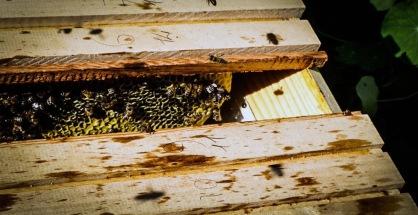 Ferrari Winestudio bees
