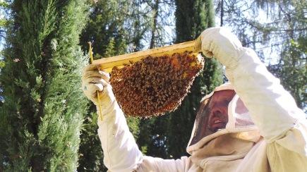 Ferrari winestudio bees2
