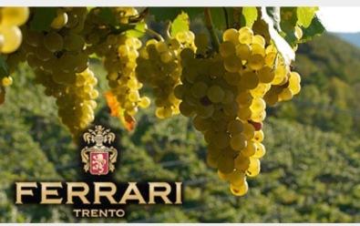 Ferrari Winestudio chardonnay2