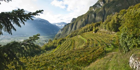 Ferrari winestudio vineyards via decanter