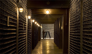 Ferrari Winestudio wine cellars