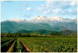 www.vinoautore.com