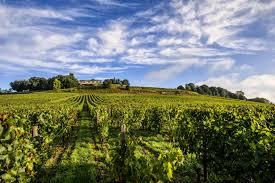 Pauillac vineyards via www.insidertasting.com