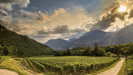 Maso Pianizza Vineyard