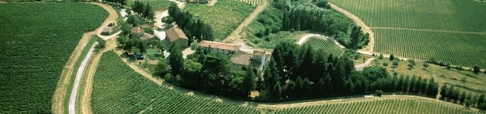 Frescobaldi Chardonnay vineyard