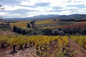 Vineyards growing among garrigue via www.vinsdurousillon.com