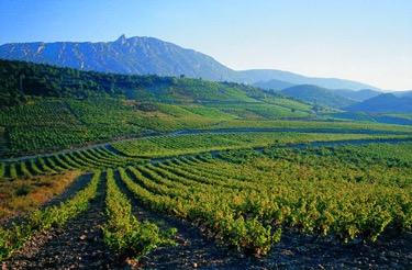 M. Chapoutier Cotes de Roussillon Villages www.sacriana.com