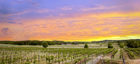 Spicewood Vineyards Texas High Plains