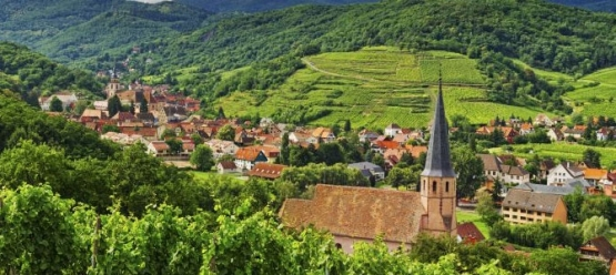 alsace via wines of alsace