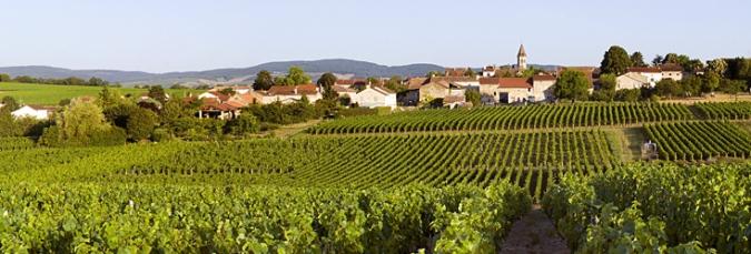 www.bourgognes-wine.com